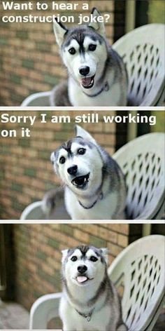 visit www.amazingdogtales.com for the best funny dog joke pics,inspirational dog stories and dog news.... funny animal - dogs