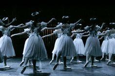 First buyer receives a complimentary photo of the same size // Shanghai Ballet, Le Sylphides, Ballet, Corp de Ballet, Ballerina,