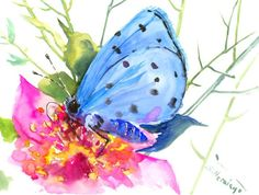 Blue Butterfly on  Pink Flower, original watercolor painting, 12 X 9 in, blue white, nature painting