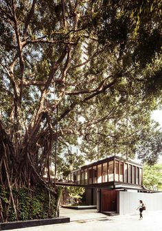 banyan house ~ w design