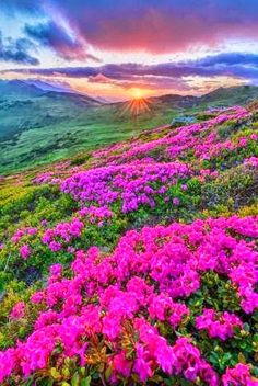 Sunset on Hills of Flowers Beautiful Nature Pictures, Nature Photos, Amazing Nature, Pretty Pictures, Beautiful Landscapes, Landscape Photos, Landscape Photography, Nature Photography, What A Beautiful World