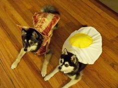 #pets #halloween #dogs