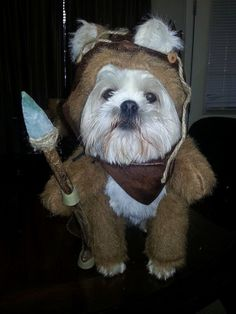 Pets as Star Wars  characters