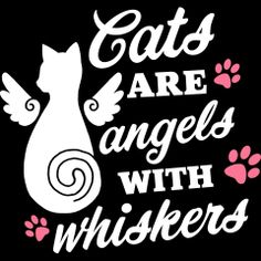 Cats are Angels with Whiskers Baby Apparel, perfect for cat lovers. Cat Quotes, Funny Quotes, Winter Cat, Cat Signs, Pregnancy Humor, Funny Outfits, Animal Projects, Cat Wallpaper, Cat Drawing