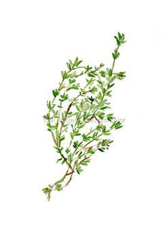 Art Print thym herbe imprimer aquarelle décor de par TheJoyofColor
