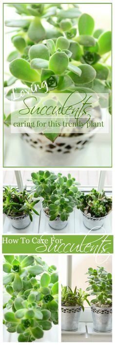 SUCCULENTS How to plant and care for these trendy plants