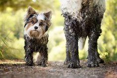 Очень милые снимки;) Осенние собаки в фотографиях Габи Стиклер (Gabi Stickler)