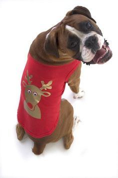 Puchi - Reindeer Dog Tshirt – The Dog Demands Moving Eyes, Dog Jumpers, Pre Christmas, Dog Coats, Drink Sleeves, Reindeer, Your Pet, Pitbulls, Pets