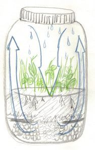 Learning Lesson for kids: Terrariums as an ecosystem-->this could be an end of unit celebration and show the skills of caring for something (life skill), following directions, working together etc...