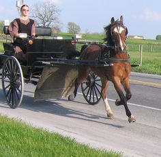 Nice horse with open buggy. I saw one like  this in IN,on my way to MI.