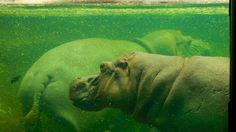 San Antonio Zoo and Aquarium in San Antonio, Texas | Expedia