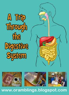 Perfect for 3 boys: Supply list and instructions for a virtual trip of a lunch through the digestive system. Human Body Science, Human Body Activities, Health Activities, Cool Science Fair Projects, Cool Science Experiments, Science For Kids, Science Ideas, Life Science, Digestive System For Kids