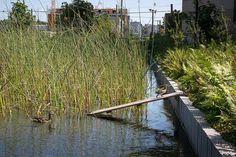 Bill_Melinda_Gates_Foundation-Gustafson_Guthrie_Nichol-ASLA_Award_2014-08 « Landscape Architecture Works | Landezine