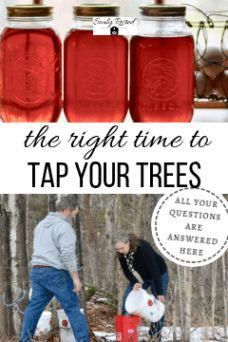The Secret to Tapping Your Trees at the Right Time Survival Food Kits, Homestead Survival, Survival Tips, Survival Skills, Wilderness Survival, Camping Survival, Emergency Go Bag, Wild Edibles, Right Time