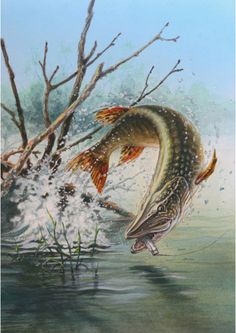 Find out more about fishing as a stress relieve, including tips on catching fish and staying safe. Pike Fishing Tips, Trout Fishing Tips, Fly Fishing, Fishing Photography, Underwater Photography, Pike Art, Fish Jumps, Fish Drawings, Fish Print