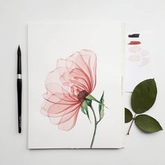 Illustrations Sharing Page ( Watercolour Painting, Floral Watercolor, Transparent Flowers, Poppies, Arts And Crafts, Sketches, Drawings, Artwork, Instagram Artist
