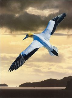 Richard Evans Art Evans Art, Artworks, Bird, Animals, Animales, Animaux, Birds, Animal, Animais