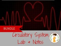 Circulatory System Lab and Notes Teaching Pack  his pack includes a foldable to help students take notes and organize background information, and a lab.