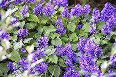 interesting blue flowers   For other photos visit www.canstockphoto.com/stock-image-portfolio/satishpendse and us.fotolia.com/p/204959108
