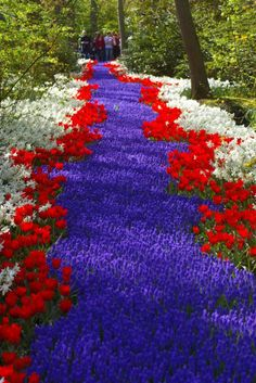 A river of white, red, and blue flowers. Dream Garden, Garden Art, Garden Design, White And Blue Flowers, Beautiful Flowers, Red Tulips, My Secret Garden, Plantation, Flower Beds