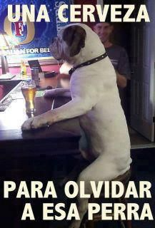 Cerveza para Olvidar