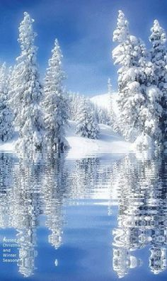 Beautiful snow scene ❄
