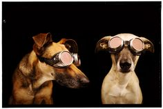 Codo and Gaga by Elke Vogelsang on 500px