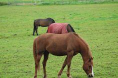 Annabanana: Horses