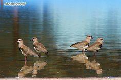 Teros Bird, Home, Little Birds, Bonito, Animales, Birds, Birdwatching