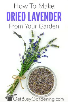 How To Dry Lavender From Your Garden – Get Busy Gardening - lavender garden Lavender Uses, Lavender Crafts, Dried Lavender Flowers, Growing Lavender, Growing Herbs, Lavender Fields, Growing Vegetables, Edible Lavender, Rose Flowers