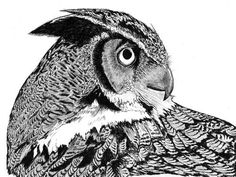 Great Horned Owl 8x10 Print by Vista Artworks by VistaArtworks, $18.00