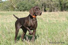 My boyfriend needs a dog like this!