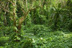 Ancient Ruins Covered by Tropical Jungle - Wall Mural & Photo Wallpaper - Photowall