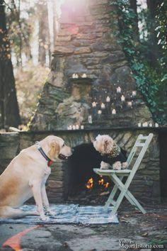 boda perros mejor historia (11)