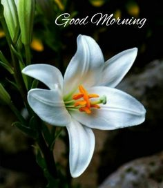 Good Morning Flowers Quotes, Good Morning Beautiful Quotes, Good Morning Images Hd, Good Morning Inspirational Quotes, Good Morning Messages, Good Morning Greetings, Good Morning Good Night, Morning Pictures, Good Morning Wishes