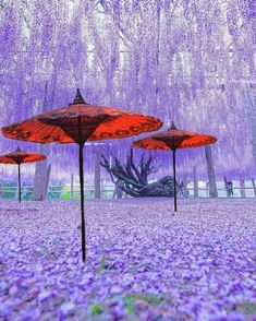 At Oriental Umbrellas we specilise in bringing to the outdoor garden furniture market, unique, individual and colorful designer umbrellas from the far east. All are bespoke designs and not available from any other supplier Outdoor Garden Furniture, Outdoor Decor, Garden Parasols, Blue Umbrella, Garden Party Wedding, Garden Gifts, Umbrellas, Amazing Gardens, Garden Design