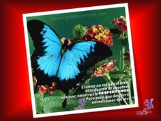 30 Frases de Paulo Coelho www.crisalidaperenne.com http://es.scribd.com/crisalidaperenne