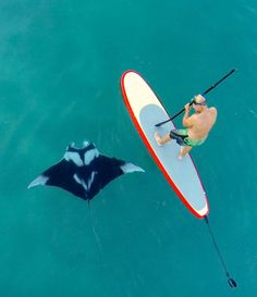 #SUP #mantarays