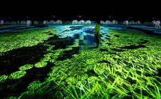 teamlab's immersive installations infill the japan pavilion for expo milan 2015