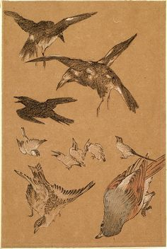 Study of Birds, Crows, Kingfishers and Sparrows by Sir Edward Burne-Jones.