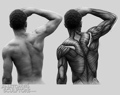 Anatomy For Sculptors via PinCG.com
