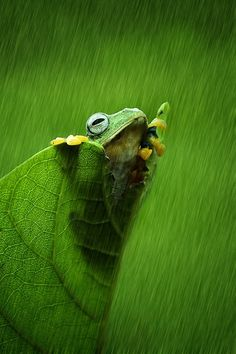 Photograph hujan pun turun.. by Izhar Ramadhan on 500px