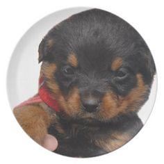 #Rottweiler Puppy Red Dinner Plate - #rottweiler #puppy #rottweilers #dog #dogs #pet #pets #cute