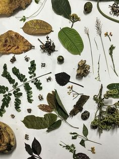 Nature's Collection