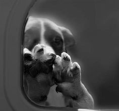 """HELP BAN ANIMAL GAS CHAMBERS! Many """"shelters"""" in the US do this to INNOCENT ANIMALS. THIS NEEDS TO STOP!!!!!!!!!!!!!!!!!!!!!!!! SIGNED"""