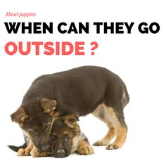 [BLOG] Puppies : when can they go outside ?