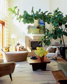 In the living room of Laurie and Adam Herz's Hollywood Hills home, designed by interior decorator Peter Dunham and architect Richard Gemigniani, a Josiane Childers painting is displayed above a fireplace surround of Walker Zanger limestone; a fiddle-leaf ficus adds drama. The Orbit chair is by Dedon from Janus et Cie, and the walnut table is custom made; the cushions are from Hollywood at Home, the rug is by Allegra Hicks, and the curtains are by Weave Design.   - ELLEDecor.com