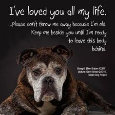 When you adopt an animal. Its a decision you made for the rest it the animals life. You are their family, best friend, and even better their world. Until the end! Makes me mad when people just decide one day they just don't want an animal anymore. Its not fair to them. <3