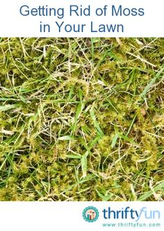 This is a guide about getting rid of moss in your lawn. Your lawn's appearance and health can be compromised by an intrusion of moss. The fuzzy green plant can begin to replace your grass. There are methods you can use for successfully removing moss from your lawn.