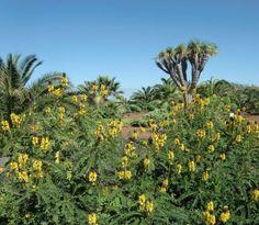 Park des Hotel Tigaiga. Im Vordergrund blühende Kassie, ein tropisches Mimosengewächs aus Afrika.